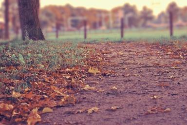 autumn-351489_1920